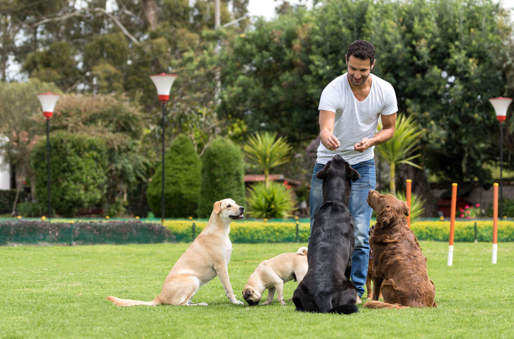 Colleyville Dog Training | Old Dogs Can Learn New Tricks