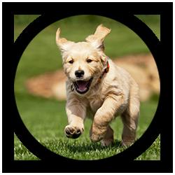Dog Trainer Oklahoma City Dog Training Okc Okc Dog Training