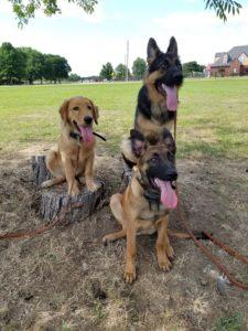 Fayetteville Dog Training