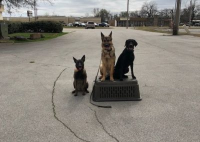 The Best Dog Training in Southlake Texas