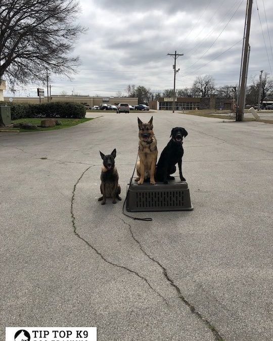 The Best Dog Training In Southlake Texas | We Have Over 10 Years Of Experience Training Dogs Like Yours