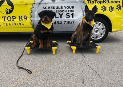 Find The Dog Trainers In Boise