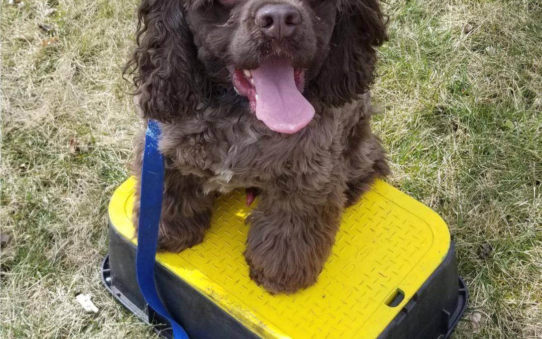 Troy Dog Training   Our Dog Training Is Peak