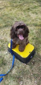 Buckeye Troy Dog Training