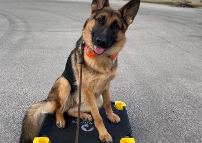 Dog Training Fort Smith