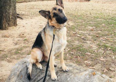 Dog Trainers Tulsa 1