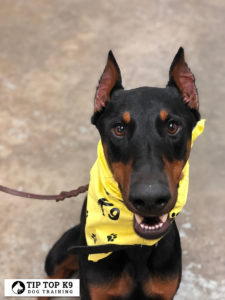 Top Dog Training Fayetteville