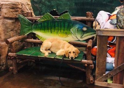 Dog Trainers Tulsa 10