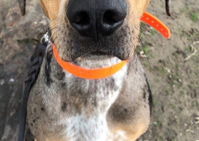 Dog Training Classes Detroit
