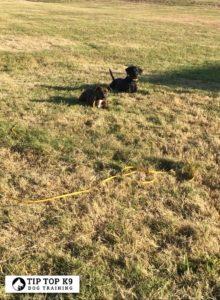 Dog Trainers Tulsa 11