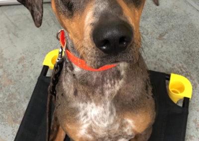 Best Dog Training Classes Detroit
