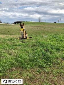 Boarding Dogs in Tulsa