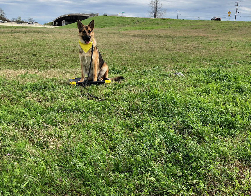 Boarding Dogs In Tulsa | What All Can We Do?