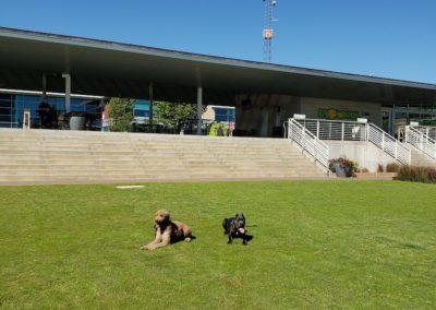 Dog Trainers Tulsa 12