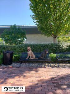 Dog Trainers Tulsa 13