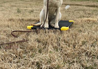 Top Dog Training Classes Detroit