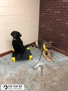 Tulsa Dog Boarding