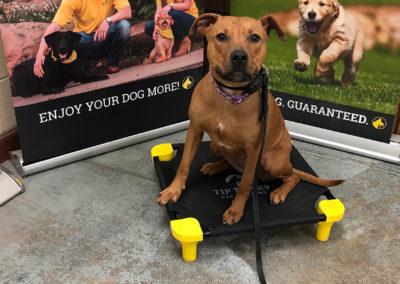 Dog Trainers Tulsa 14