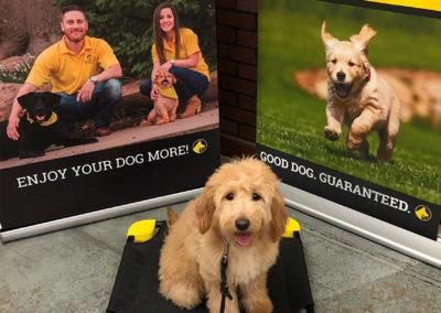 Dog Trainers Tulsa 15