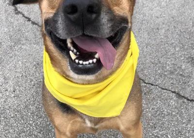 Dog Training Metro Detroit