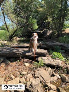 Dog Trainers Tulsa 16