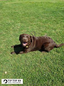 Dog training in Royal Oak Michigan