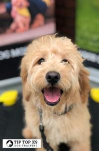 Best Dog Training in Royal Oak Michigan