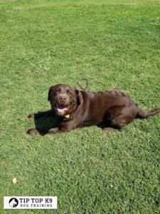 Dog Trainers Tulsa 17