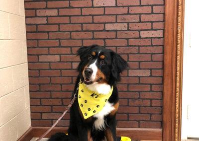 Owasso Dog Training Class