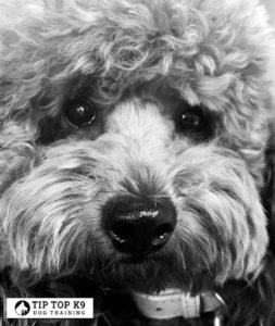 Dog Trainers Tulsa 18