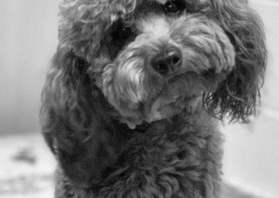 Dog Trainers Tulsa 20