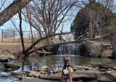 Best Dog Training West Jordan Utah