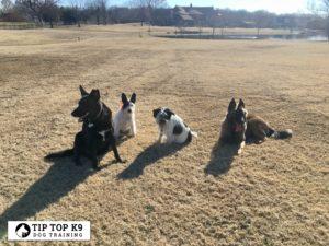 Dog Trainers Tulsa 22