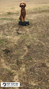 Dog Training In Bartlesville