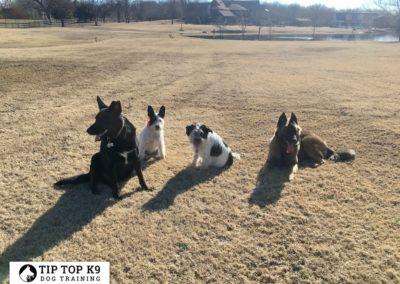 Troy Dog Training