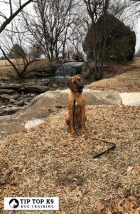 Allen Dog Training