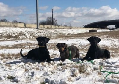 Best Sterling Heights Michigan Dog Training