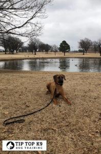 Best Dog Training Van Buren