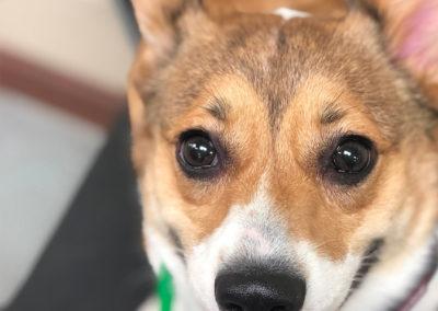 Best Plano Dog Training