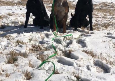 Best Dog Training Fort Smith