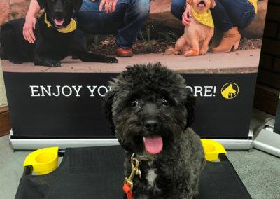 Dog Trainers Tulsa 3