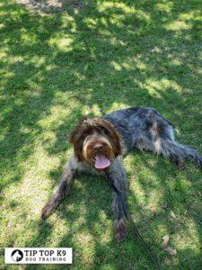 Royal Oak Michigan Dog Training