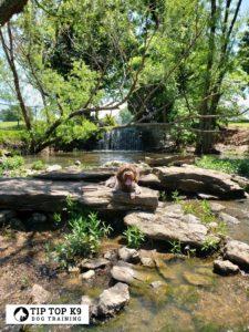 Dog Trainers Tulsa 31