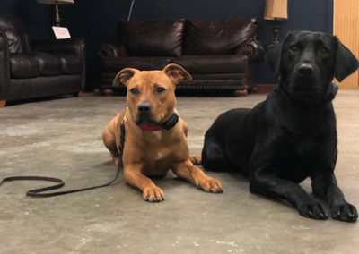 Puppy Classes OKC