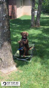 Dog Training Rogers