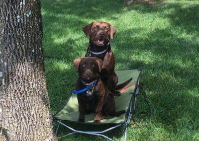 Dog Training Troy MI