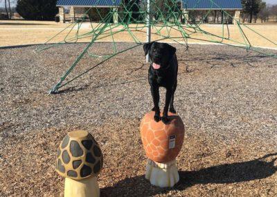 Troy MI Dog Training