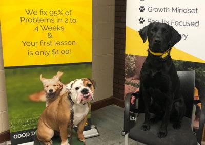 Fort Worth Dog Training