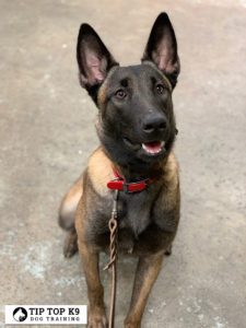 Top Plano Dog Training