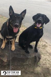 Dog Trainers Tulsa 4